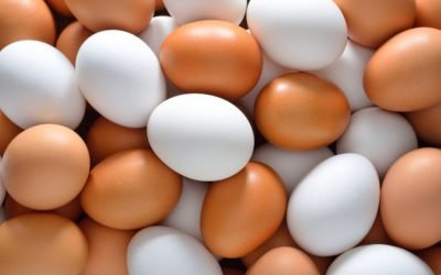 CEP board president steps 'Inside the Barn' to talk eggs and ag