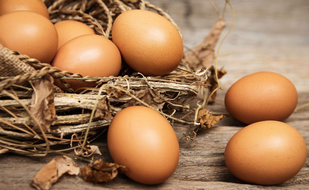 USDA Egg Bids for Trade Mitigation