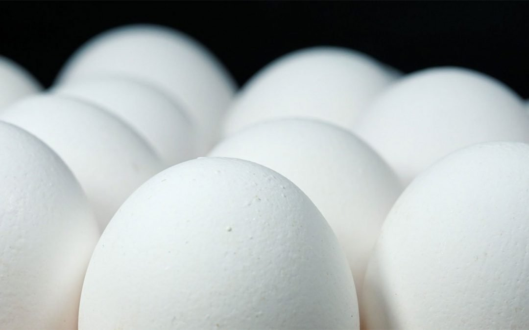 USDA Bids for Eggs